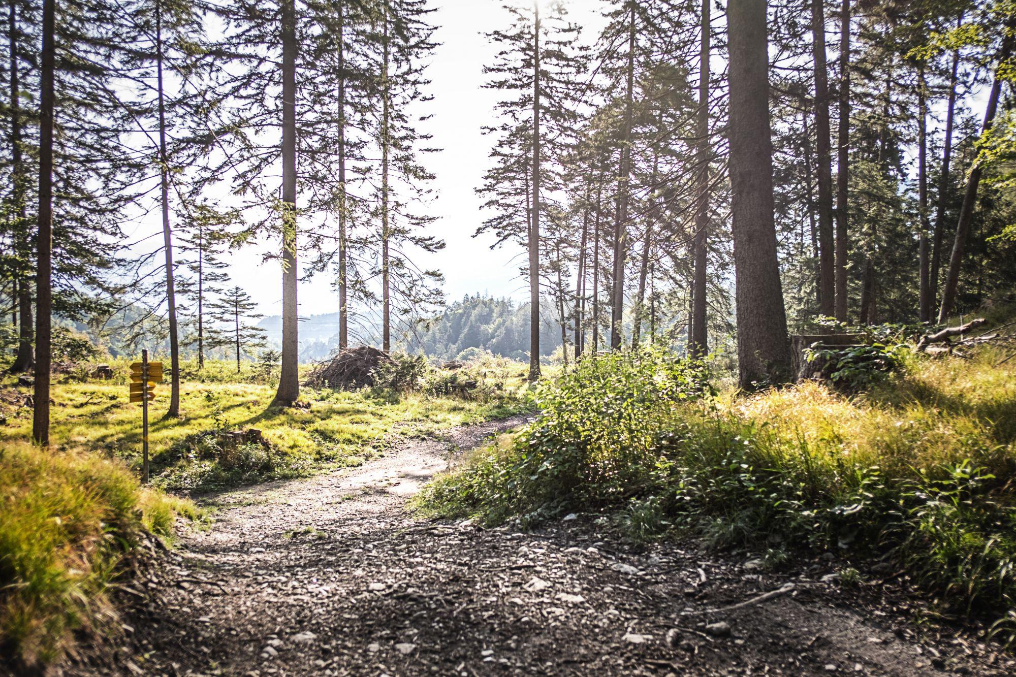 Erholung und Freizeit im Wald